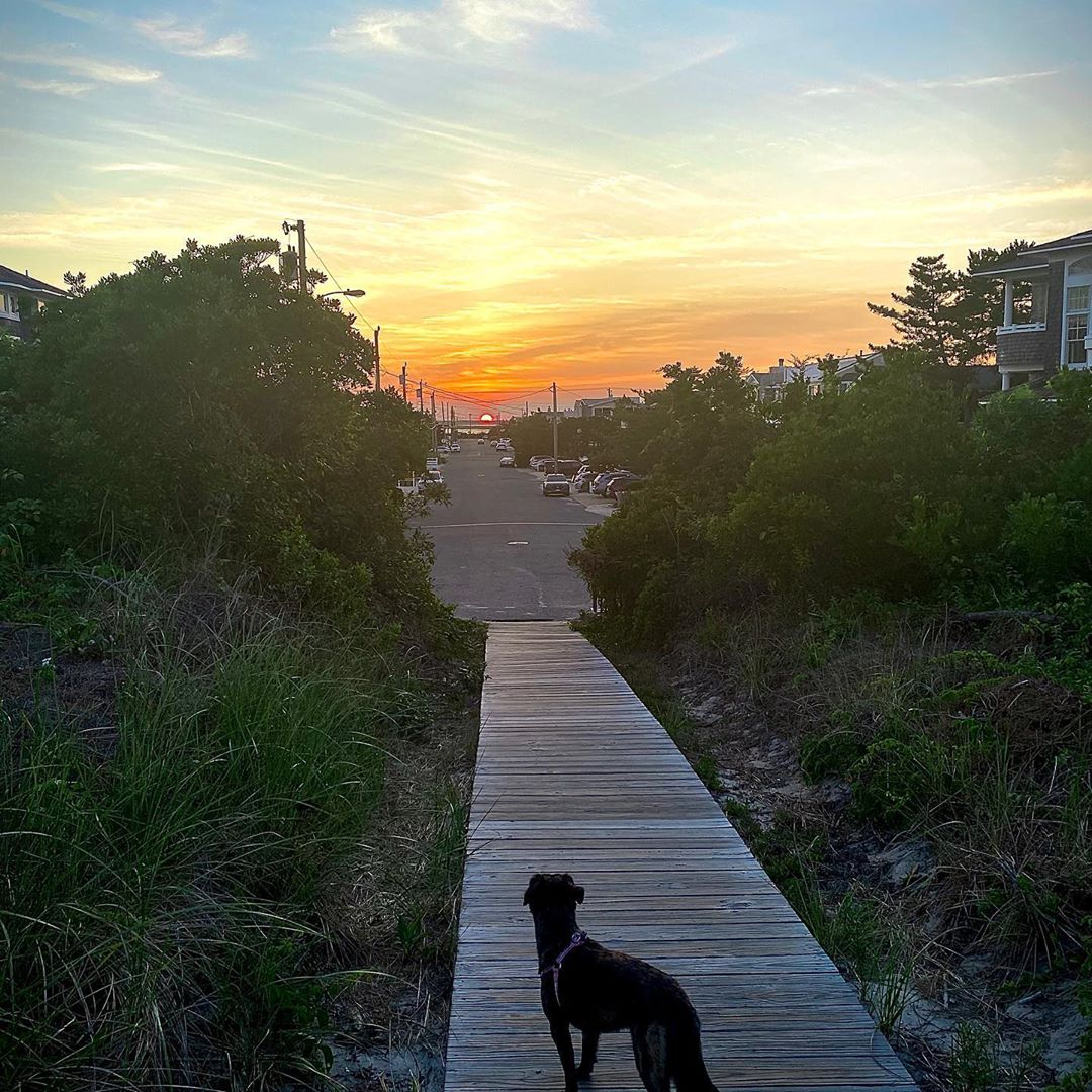 My dad and grandpa take me out  for a walk at sunset every night.  I'm a lucky g…