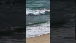 VIDEO: Sharks Attack Injured Dolphin On Long Beach Island