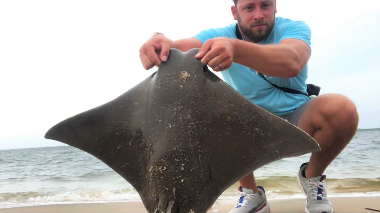 Back to Back COWNOSE RAYS!! Long Island Summer Surf Fishing