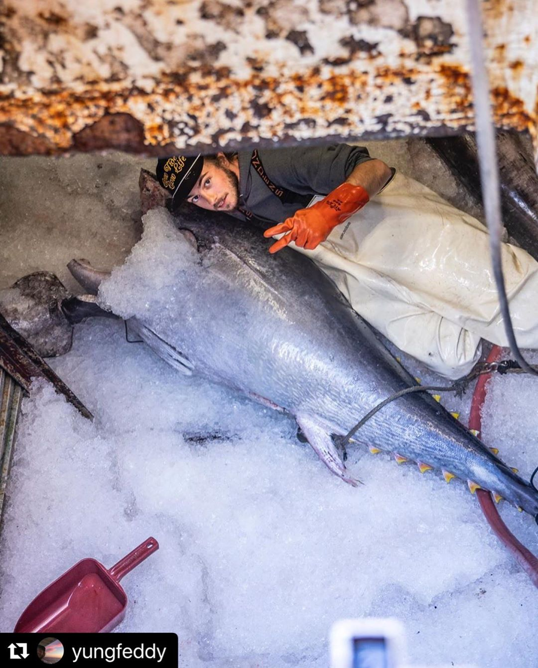 F/V Alexandria Dawn is just about home to pack tuna and swordfish today. Tonight…