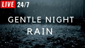 🔴 Gentle Night RAIN 24/7 for Sleeping, Relaxing, Study, insomnia, Rain Sound, Gentle Rain No Thunder