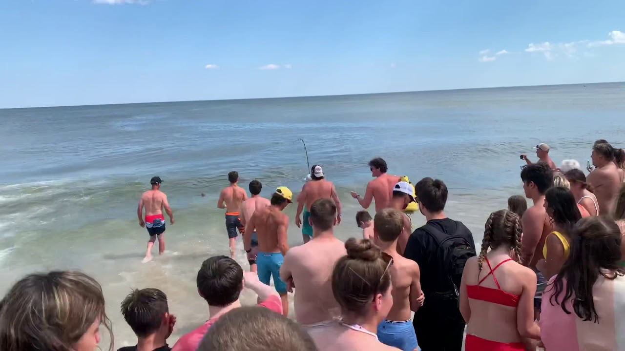 Guy Catches Shark 6-30-19 Beach Haven NJ #LBI