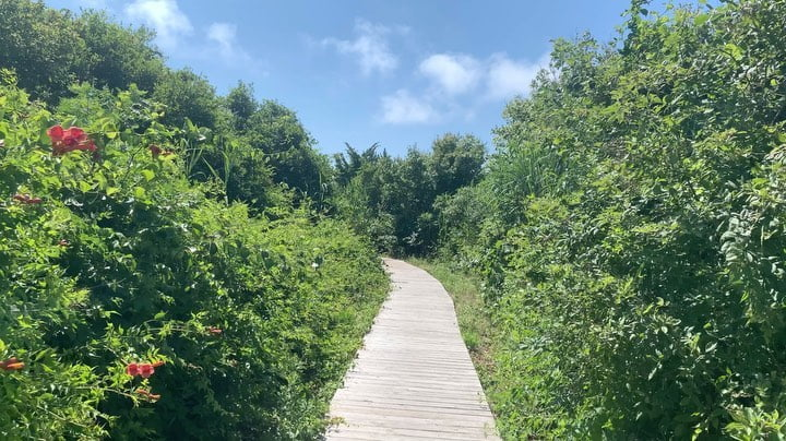 LBI A beautiful walk to the beach, complete with bird sounds and just a few flip flo…