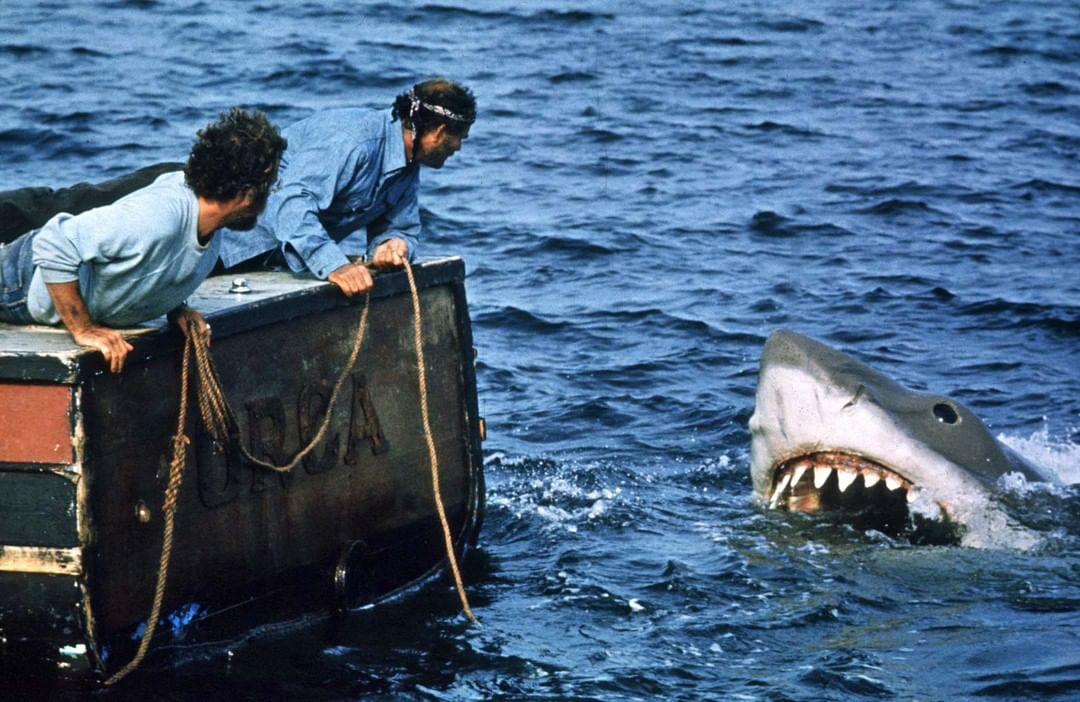 LBI Did you get enough of Shark Week?  Also, the Matt Adams Duo is playing on the …