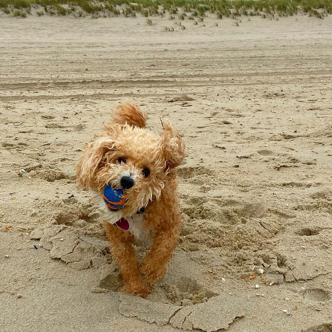 LBI My buddy loves playing ball on the beach.        …
