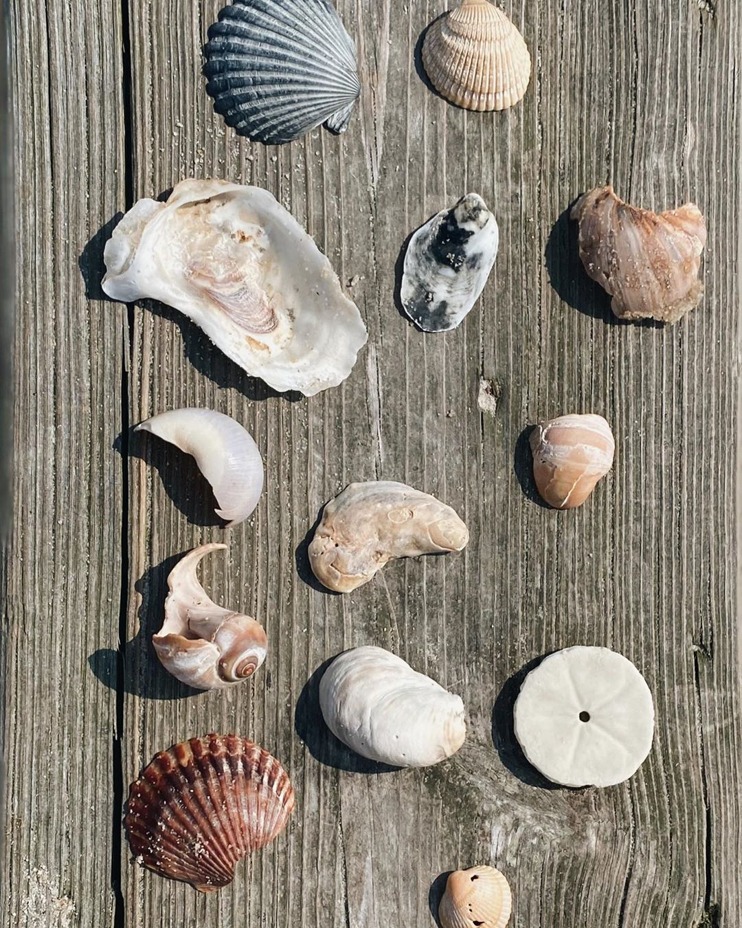 LBI Treasures …