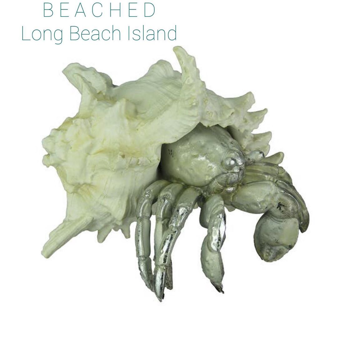 LBI  Yes…it's a Hermit Crab & yes…it's going on someone's coffee table! shop 11a…