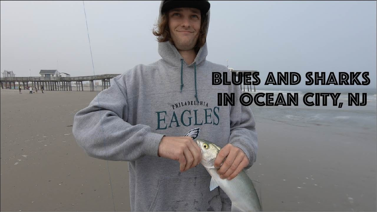 Catching Bluefish and Sharks in the Ocean City, New Jersey Surf #LBI