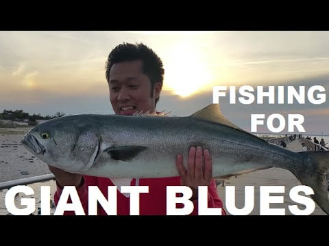 Fishing For Giant Blues At Barnegat Lighthouse NJ 2016 #LBI
