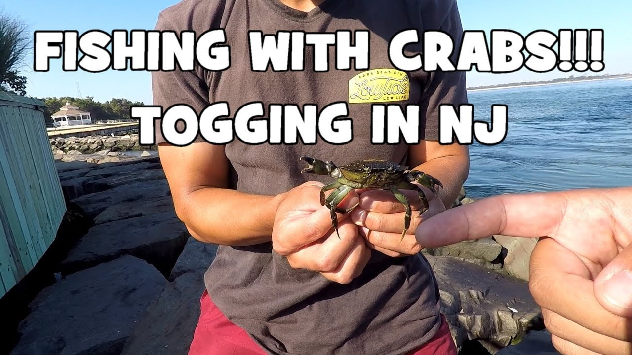 Fishing with CRABS?! TAUTOG (Blackfish) SLAYFEST at the INLET! (Barnegat Light, NJ) #LBI