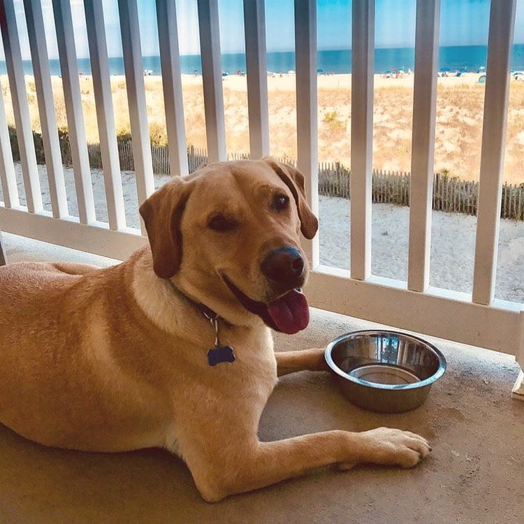 LBI Catching some rays oceanfront style!       : …