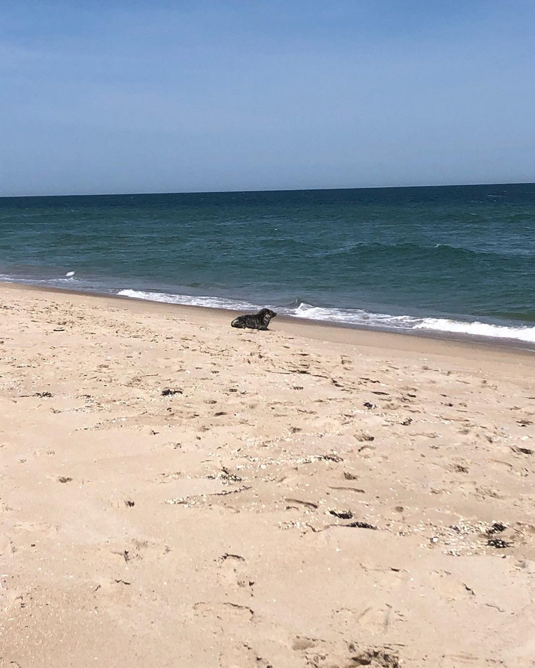 LBI Got a visit from a little friend on 97th street beach yesterday       …