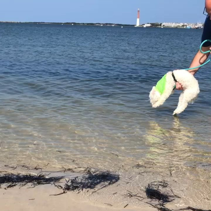 LBI Instincts for swimming . .                    …