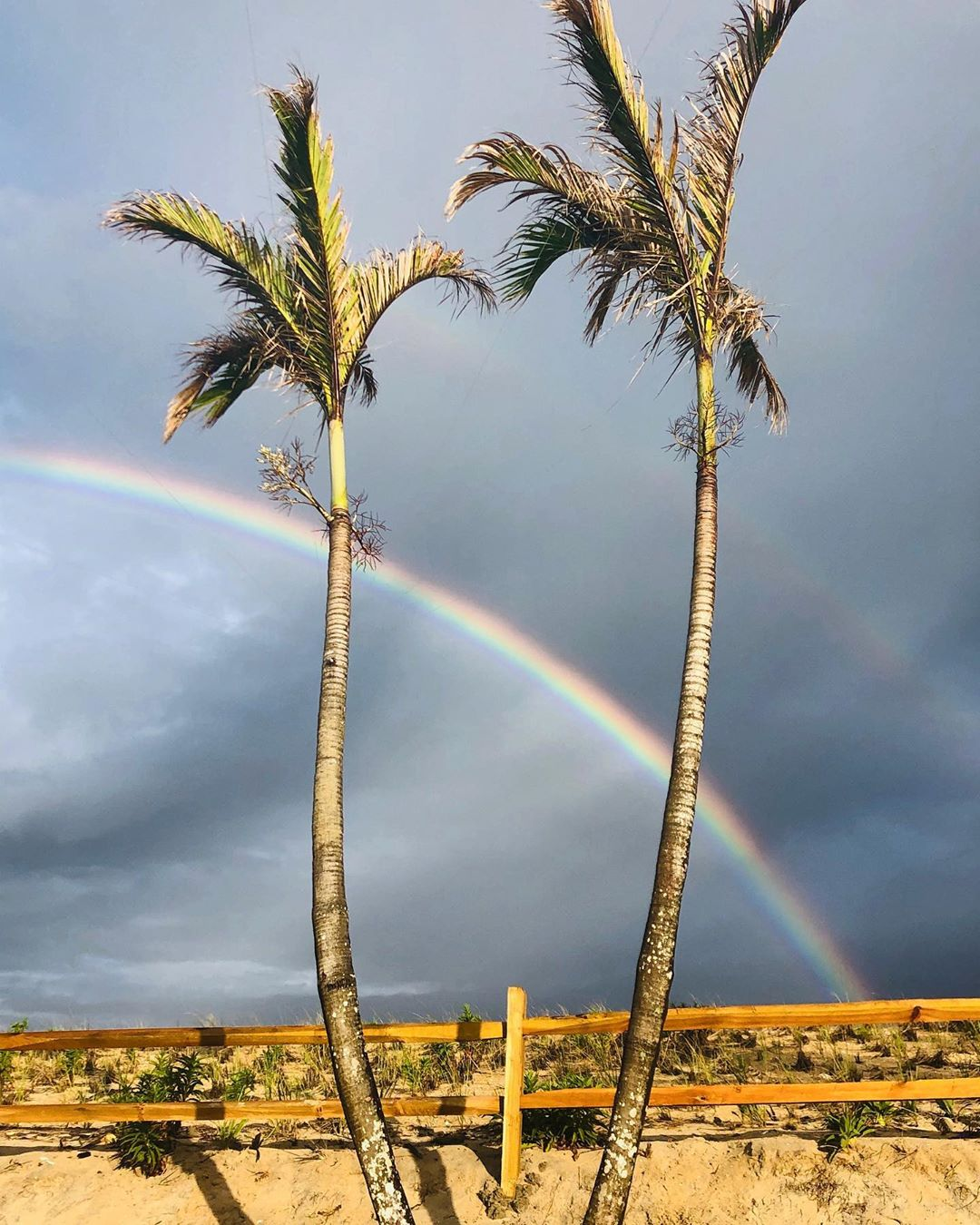 LBI Keep your pot of gold, we'll take the palm trees under our rainbows. Come join u…