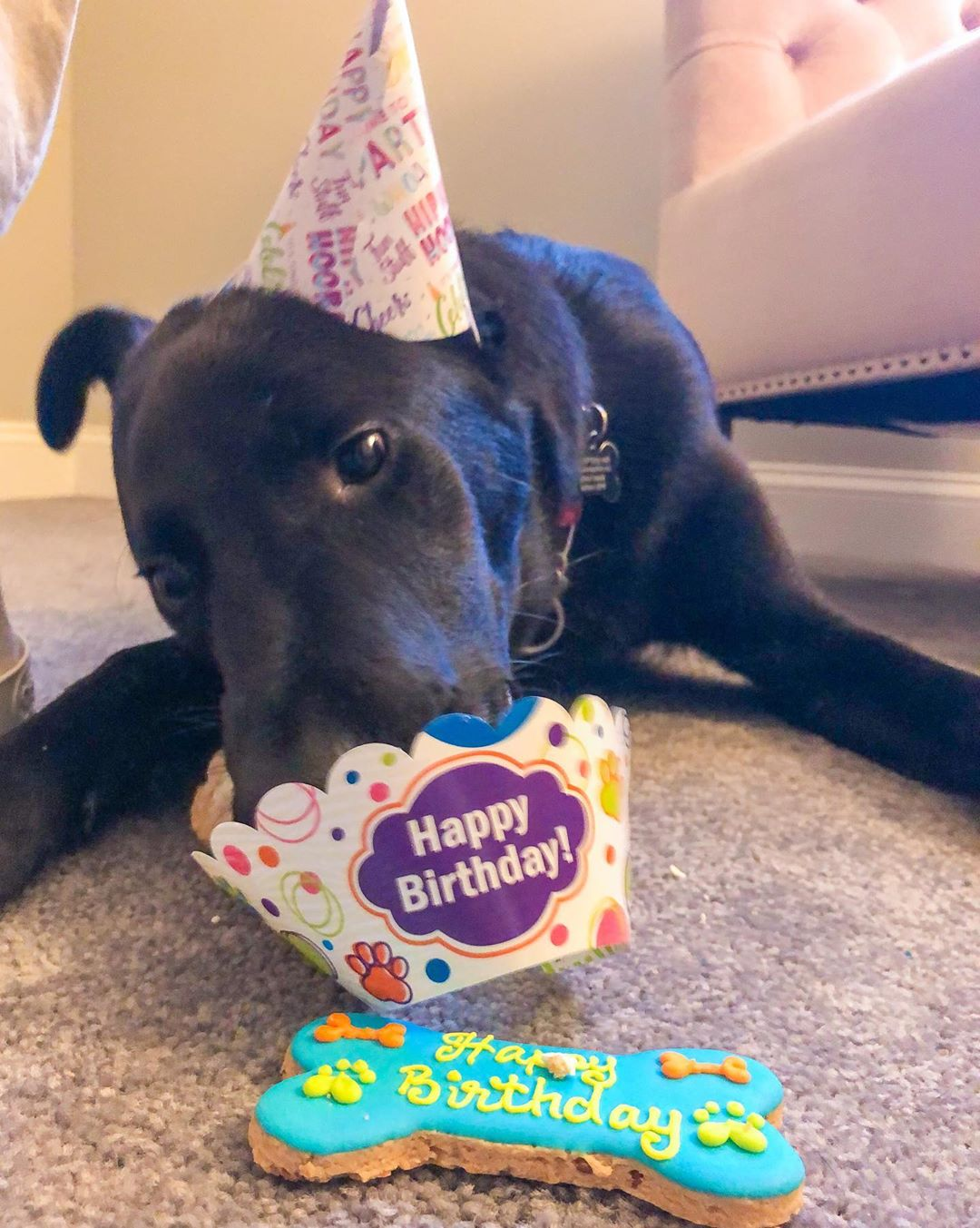 LBI Let's PAW-TY!   Happy first birthday to me!!!!!!! Thanks to everyone who made to…