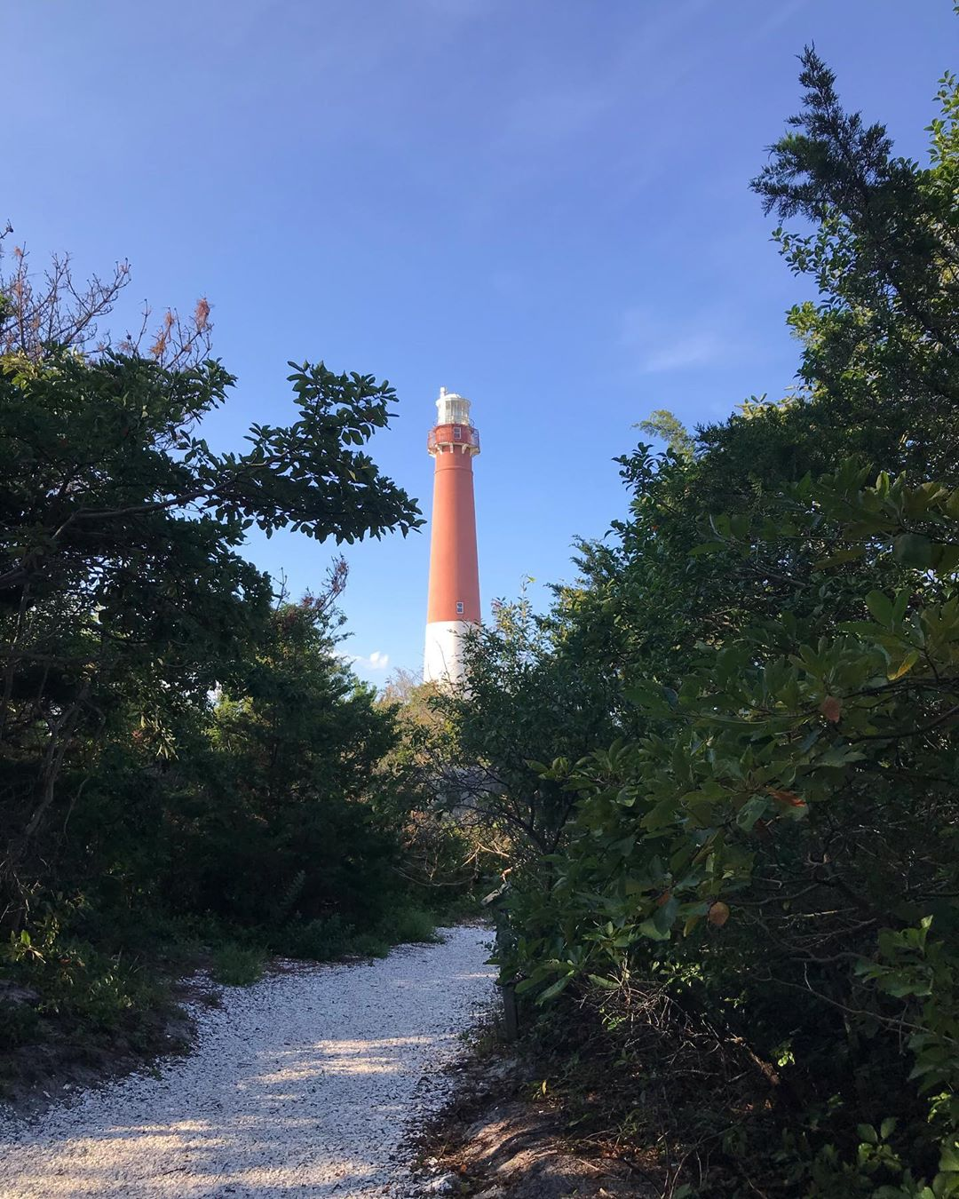 LBI One of my favorite places on the island, meandering the maritime forest trails a…