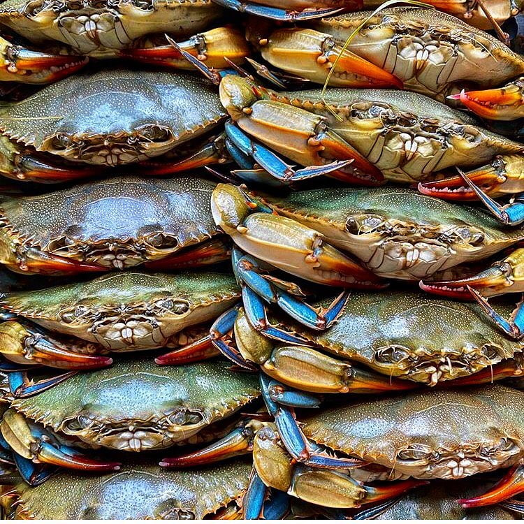 LBI Soft Shell Crabs available fried or sautéed. Which do you prefer?!  . . . . . . …