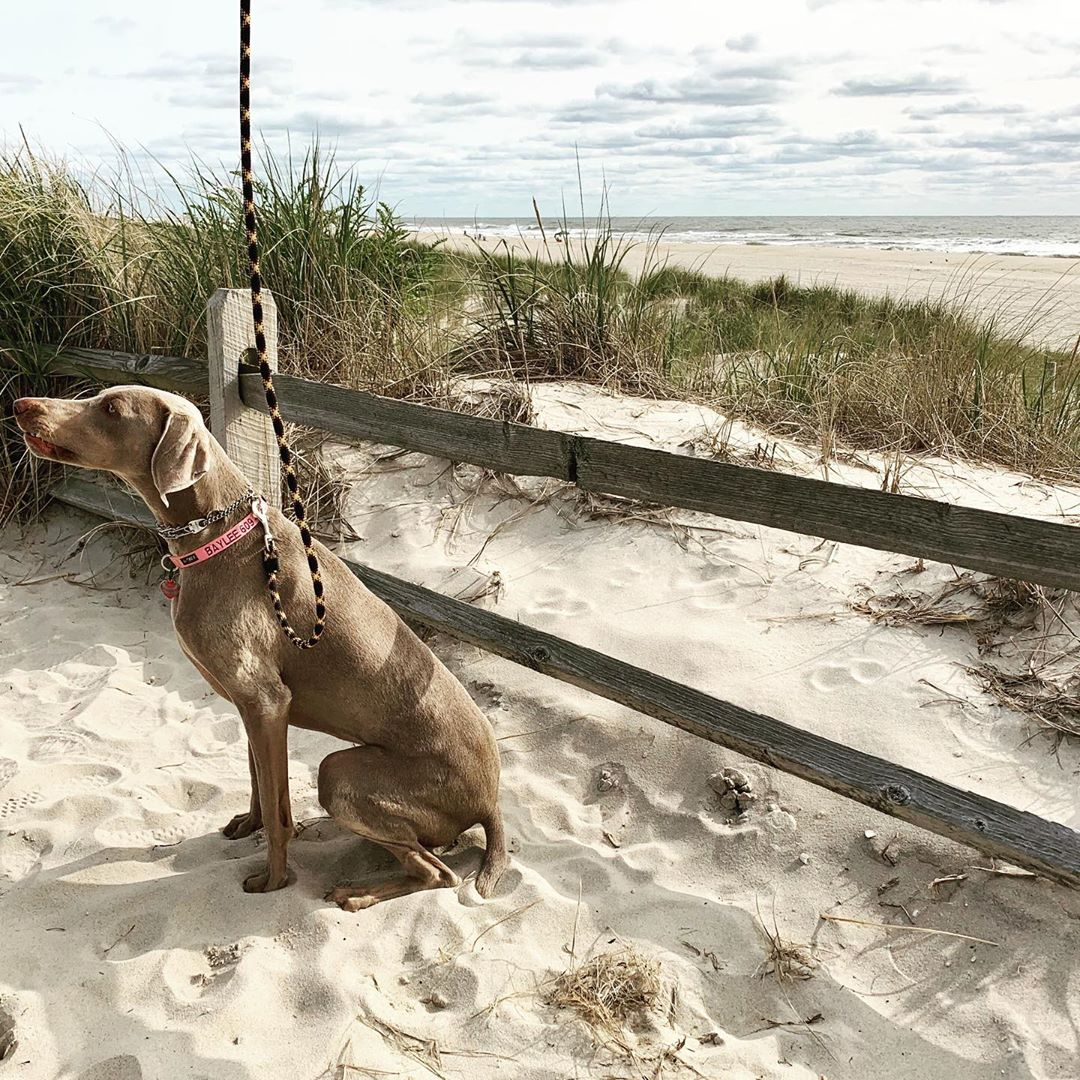 LBI Waiting patiently for October 1-dogs allowed on the beach day               …