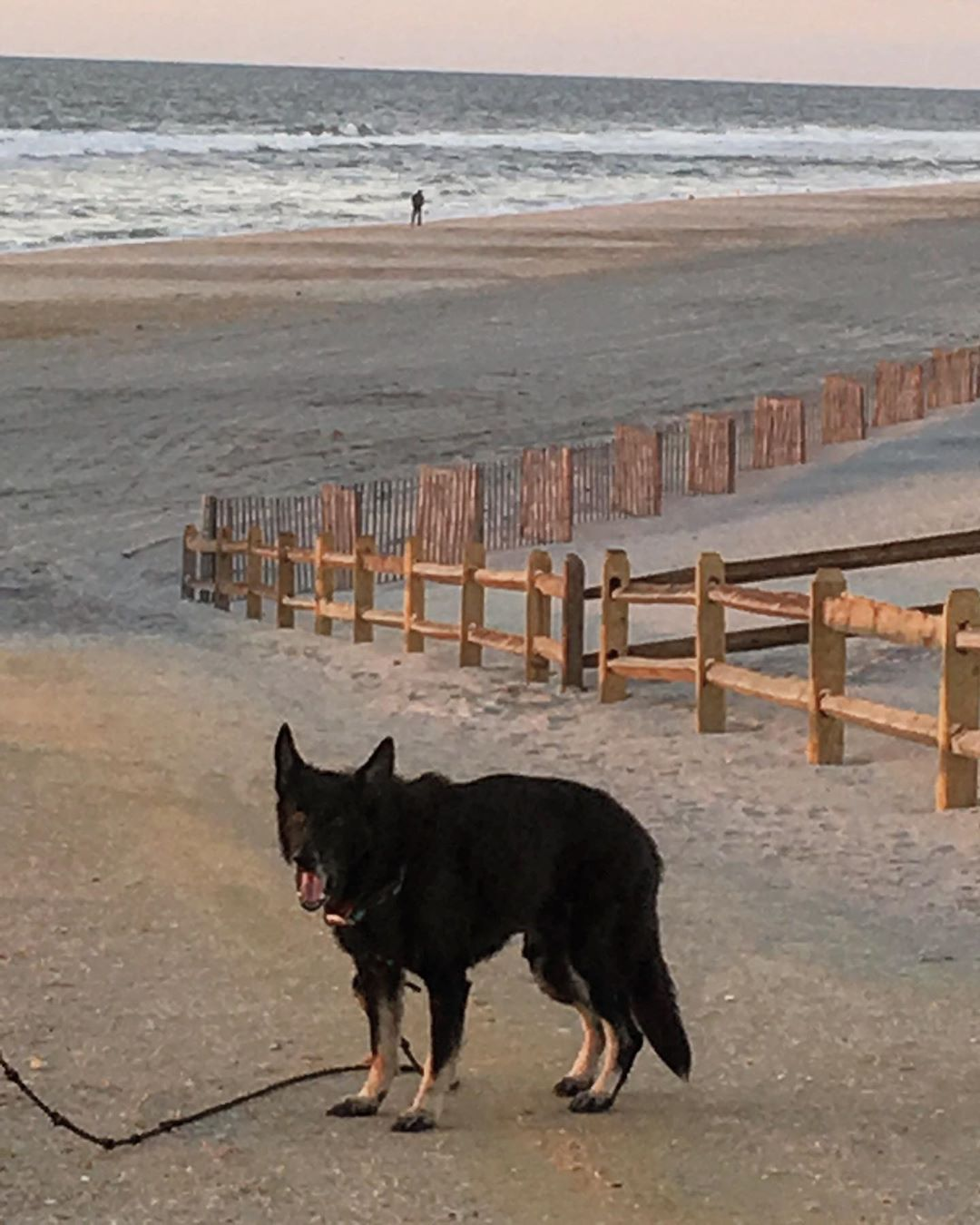 LBI We lost our dear sweet Rocky yesterday. He was very loved and had a good long li…