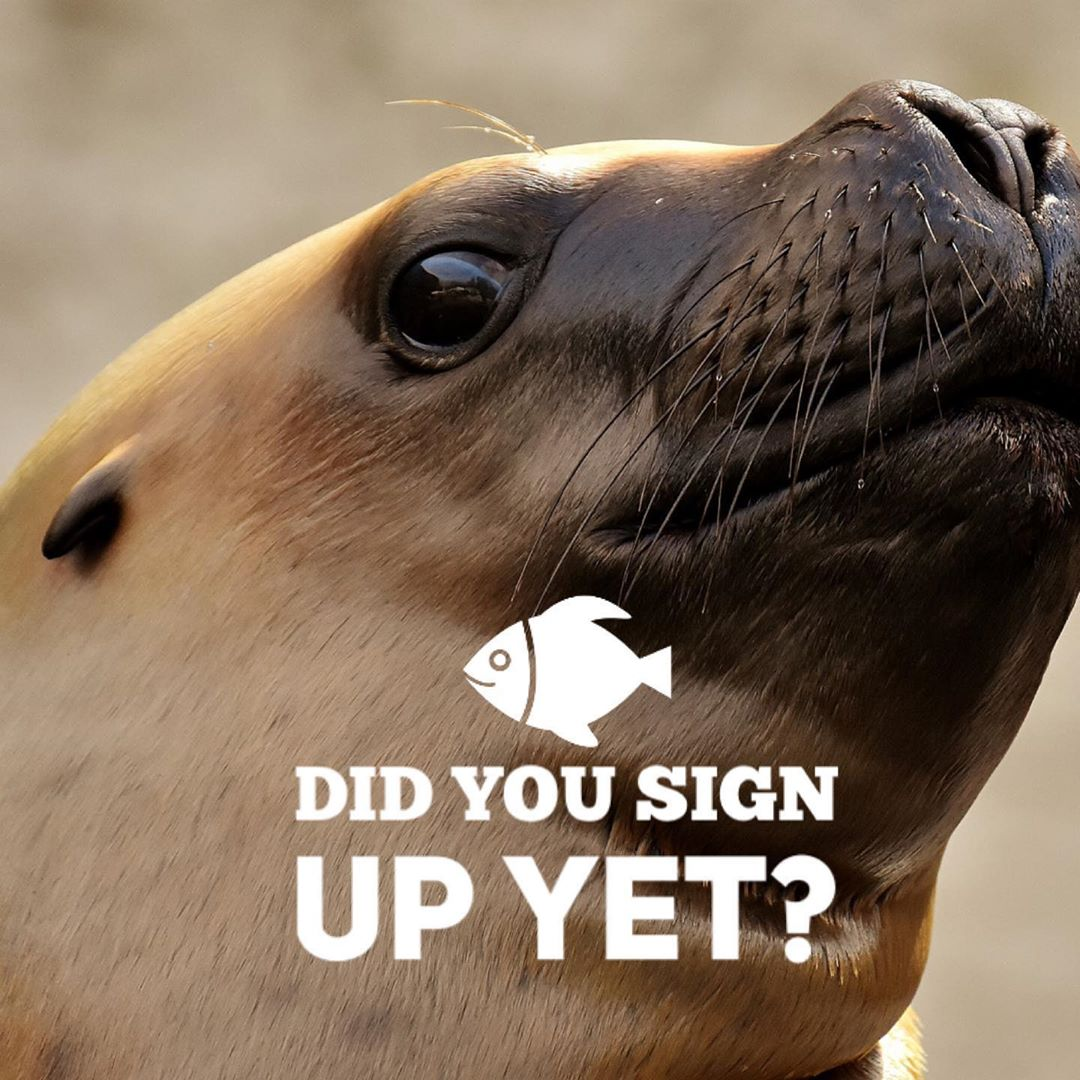 LBI We started an email list! To sign up to get updates on events & workshops click …