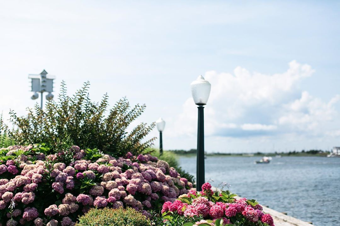 LBI We're loving all of the exceptional hydrangeas in bloom across the island. These…