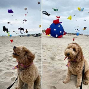 Read more about the article LBI Great time checking out the kites last weekend at the                       …