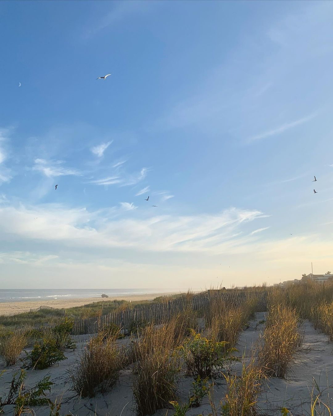 LBI Golden Afternoons on LBI   …