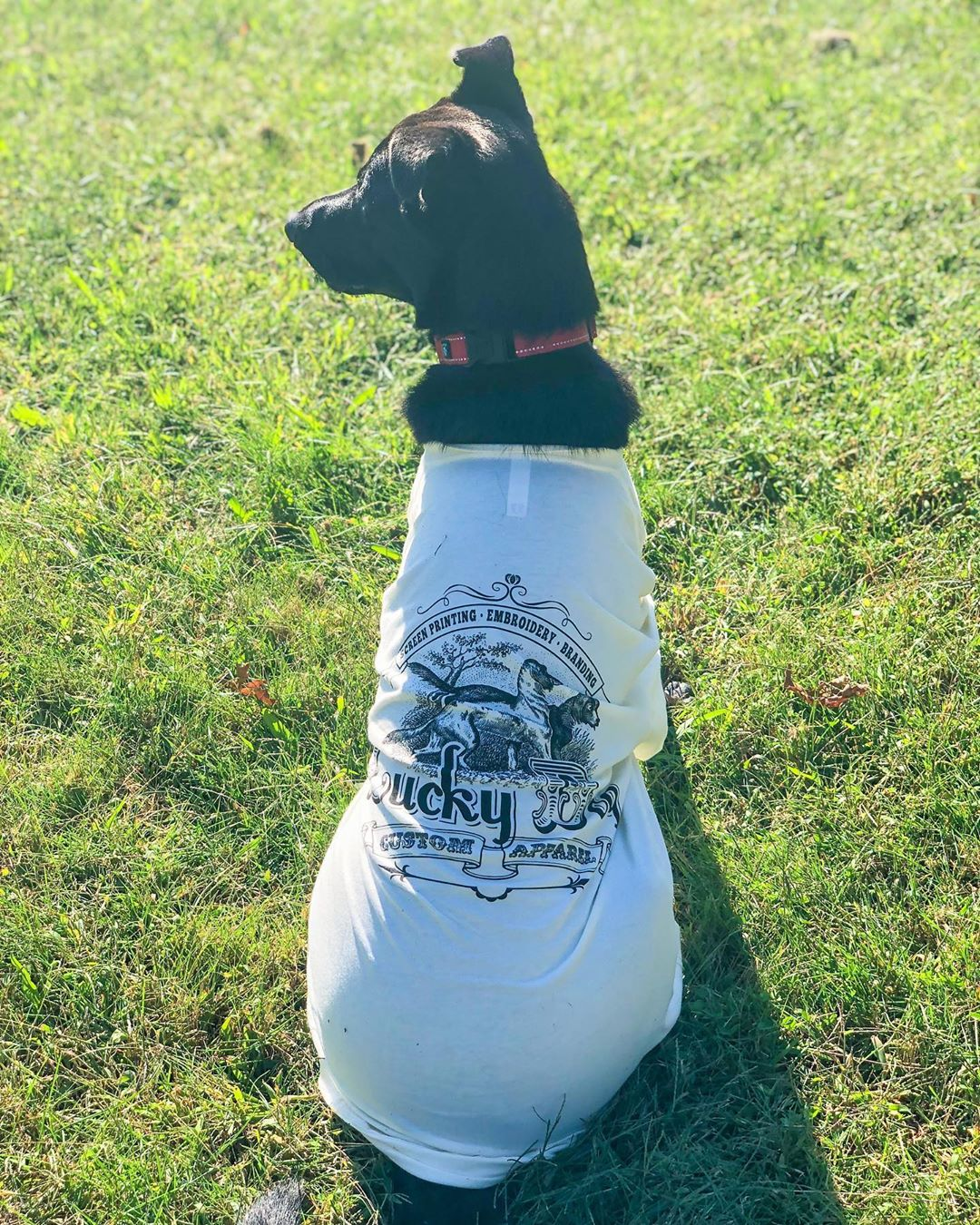 LBI I'm one Lucky dog in my  !  Lucky dog custom apparel is a NJ small business just…