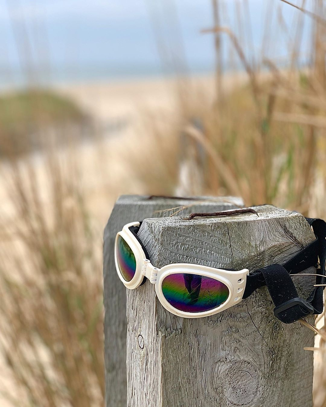 "LBI ""Lost Goggles from Lost Summer 2020"".      …"