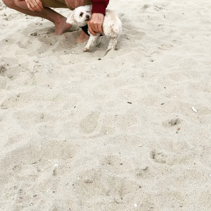 LBI My first time in the sand! It was super fun and then I ate it and my humans got …