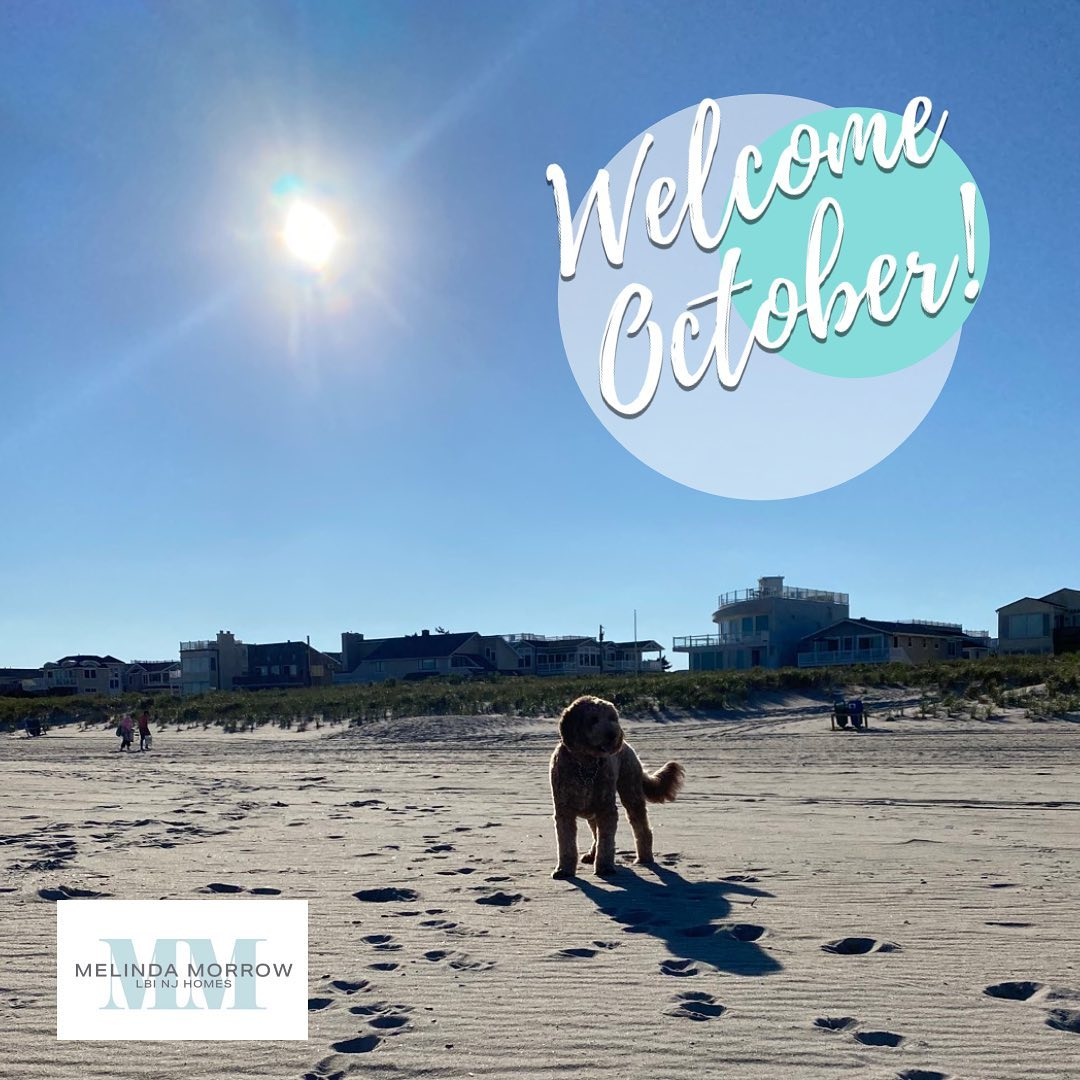 LBI October is here…dogs are now allowed in the beach in Long Beach Twp!          …