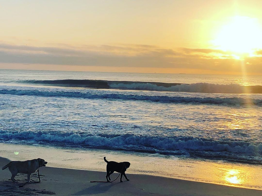 Read more about the article LBI Sunrise walk    …