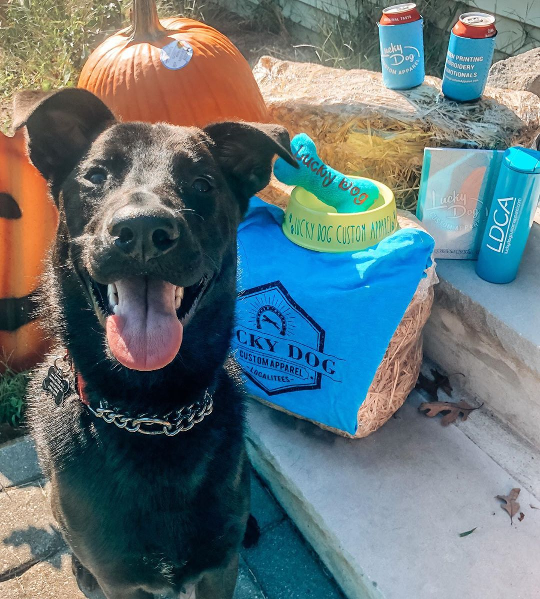 LBI Thanks to  for choosing me as the October Dog of the month! Lucky Dog custom app…