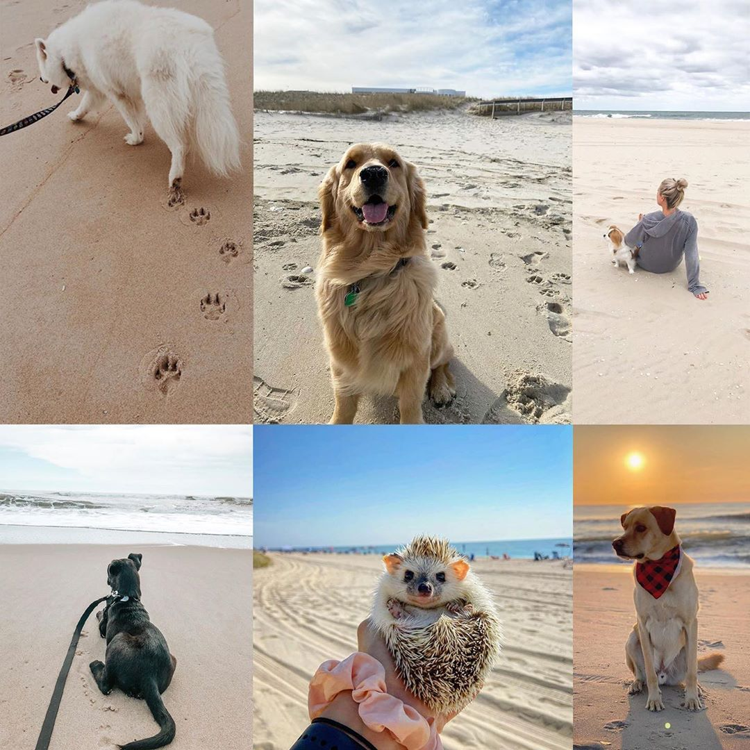 LBI We asked for pet beach pics and you guys DELIVERED.  We even added some of the L…