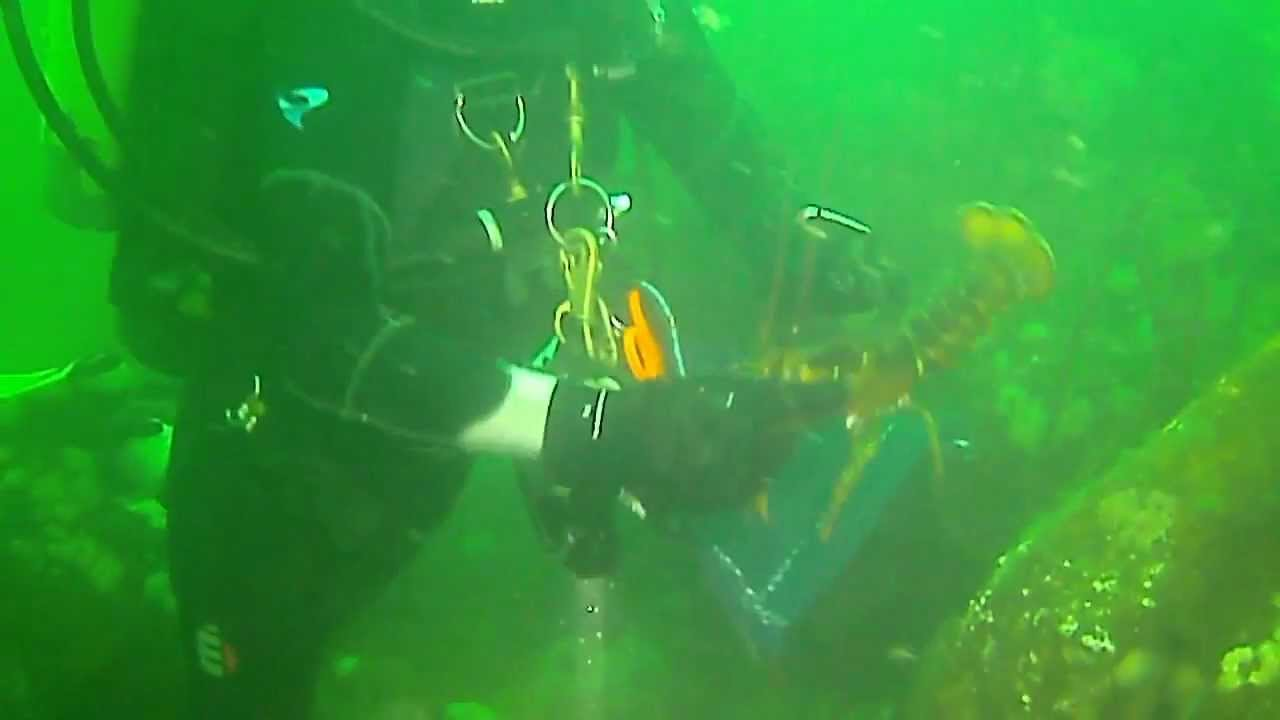 Read more about the article SCUBA Diving off of the Dina Dee II out of Barnegat Light, NJ #LBI