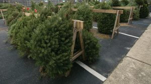 Ship Bottom Fire Co. Christmas Tree Sale Kicks Off Thanksgiving Weekend