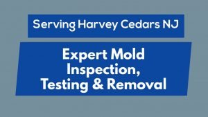 Harvey Cedars NJ   Mold Inspection, Testing & Removal #LBI