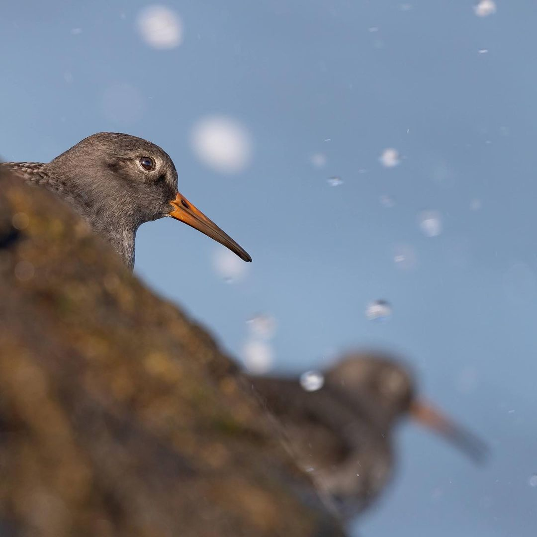 LBI Sandpipers in the splash zone. While it may not be for everyone, I like the look…