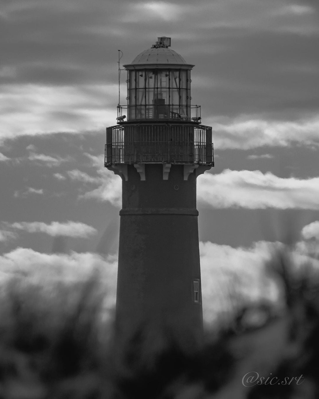 LBI Spent the day walking the shores of Island Beach State Park looking for a Snowy …