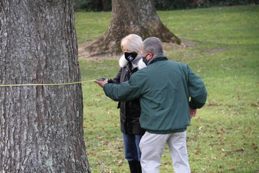 Nominate Big Trees for Ocean County's Official List