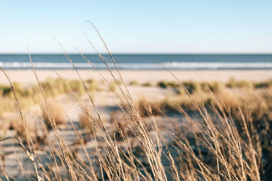 LBI Happy Thanksgiving, Surf City! We hope to see you this weekend to celebrate our …