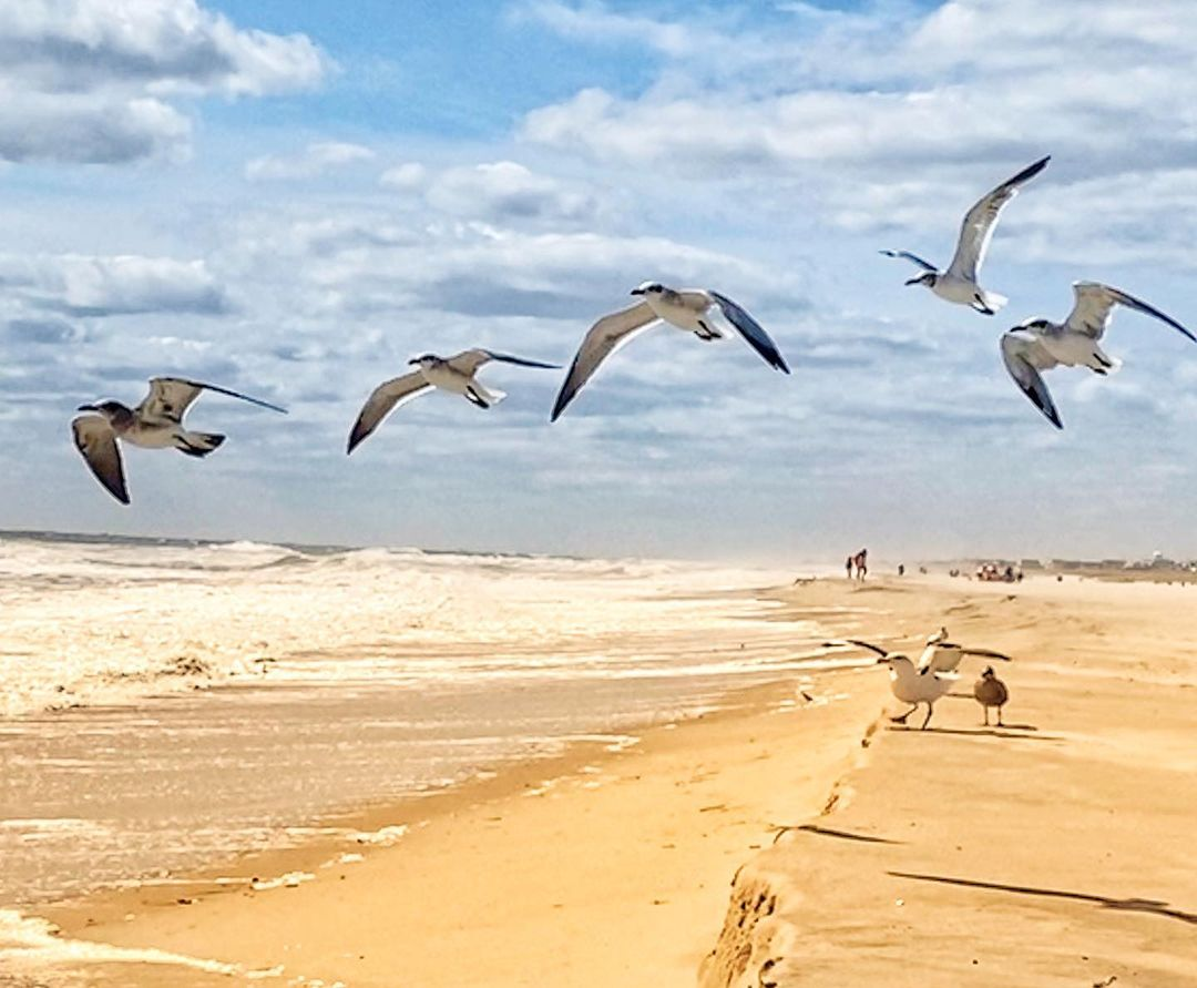 LBI Missing summer today.  I am not a fan of the cold weather.                      …