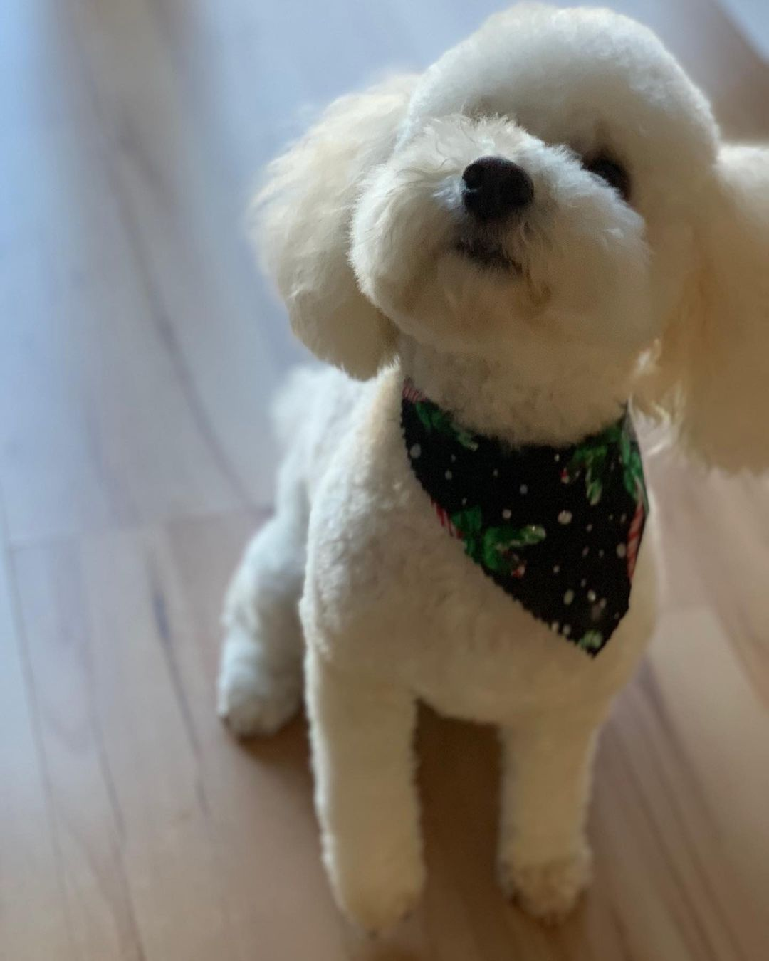 LBI Spa Day today & I got a Christmas kerchief  Ready for the holidays!!  .         …