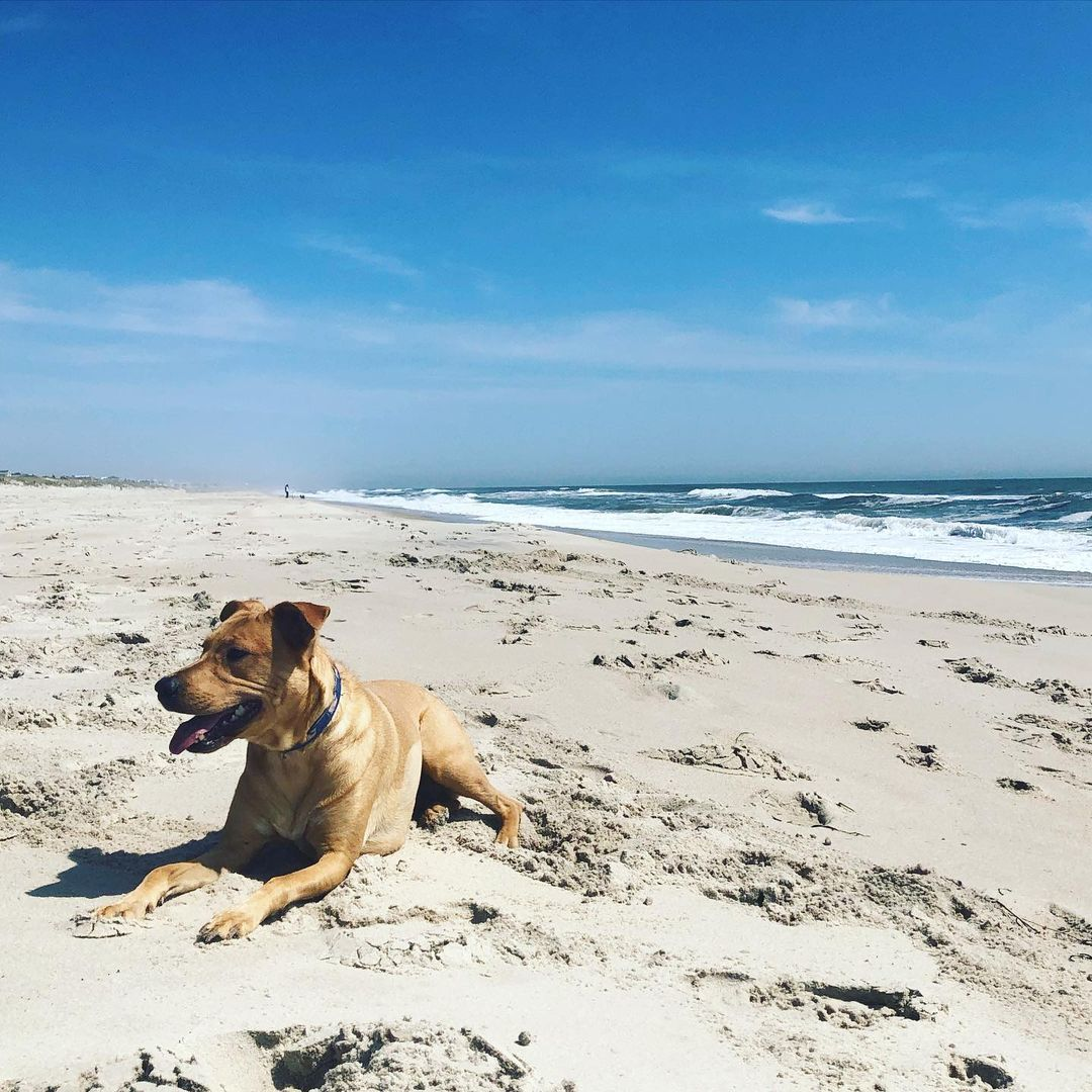LBI Suns out, tongues out. Someone told us Callie looked like an Island dog. If this…