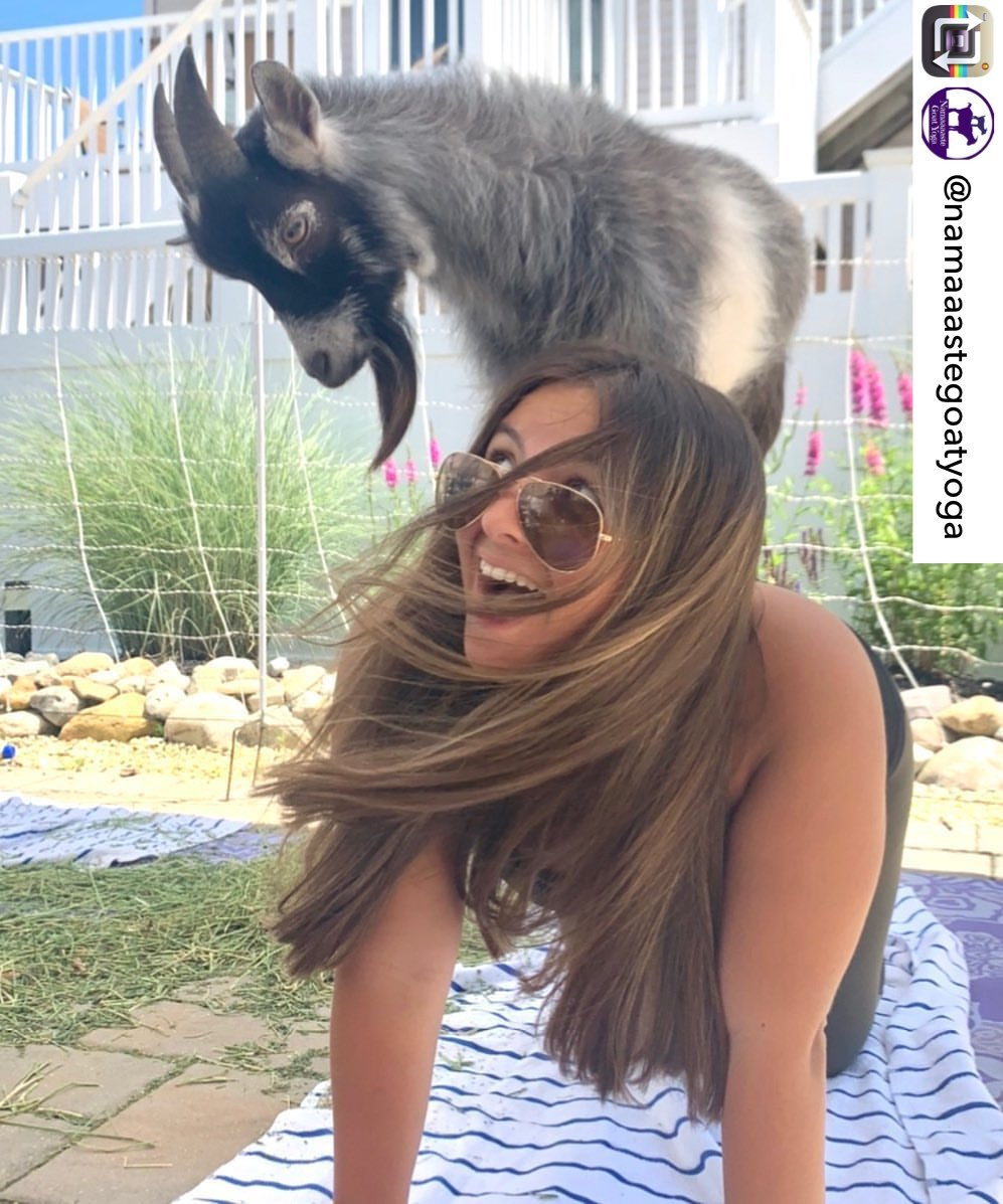 LBI There may not be fireworks in Beach Haven this year but there is goat yoga  Repo…