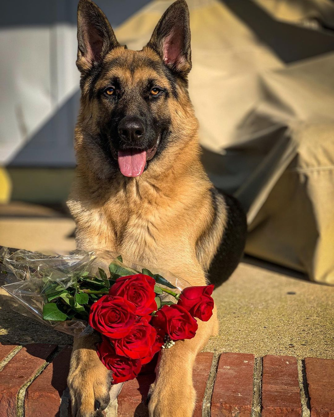 LBI Will you accept this rose?                                   …
