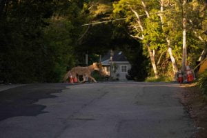 Coyotes of New Jersey Focus of Feb. 27 Virtual Science Saturday