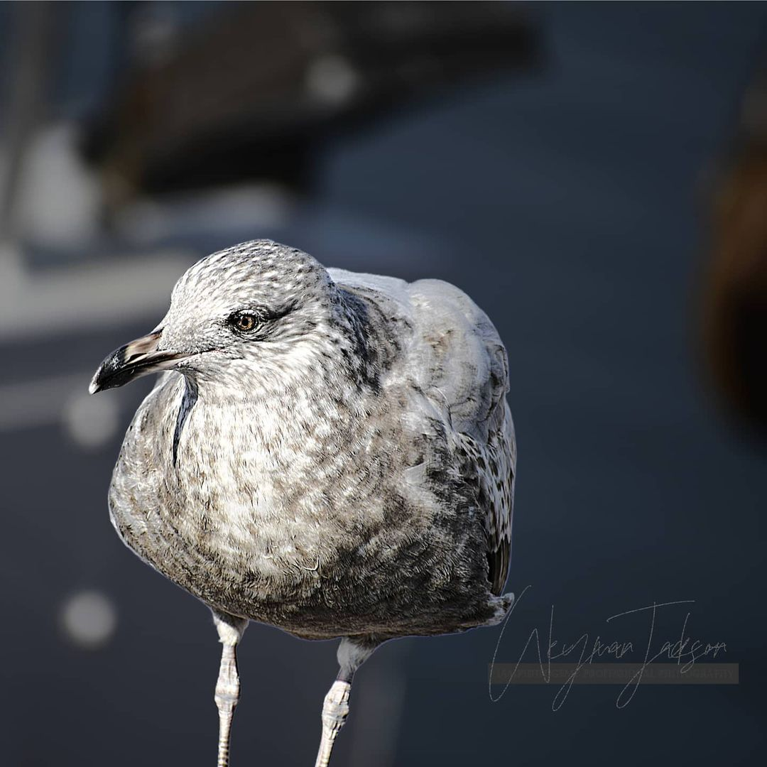 LBI Birds are out on the East Coast          …