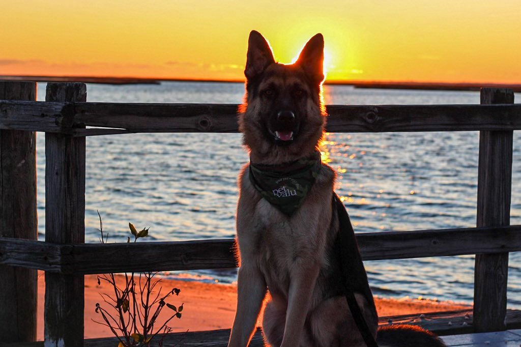 Read more about the article LBI Chasin sunsets                              …