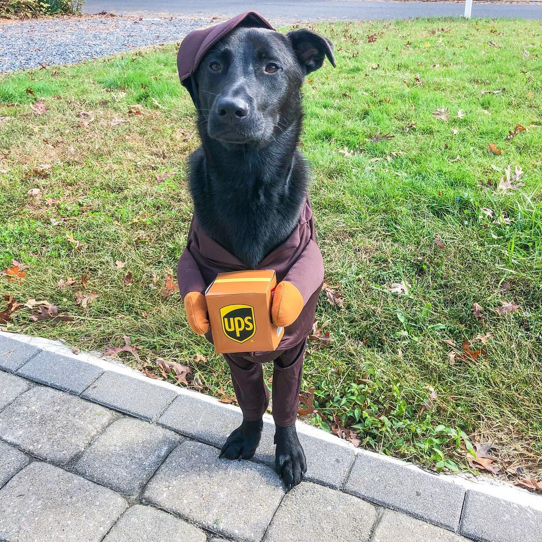 LBI Happy Halloween   Stay safe everyone & wash your paws  . . . .                  …